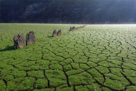 Tapestry of green grass on the cracked mud of the dry bottom of the reservoir near Portomarin Galicia