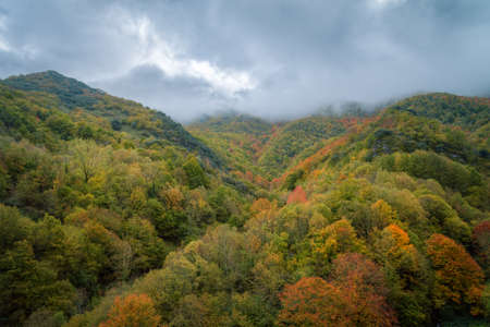 Autumn rainy day over the colorful forest in Devesa daRogueira in Courel Galicia