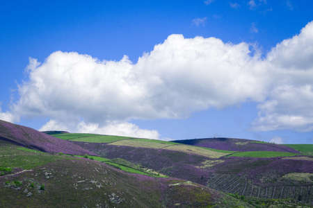 Green meadows and magenta heaths in the high hills near the clouds in Triacastela in Courel Galicia Banco de Imagens
