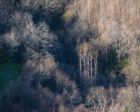 Lights and shadows between bare forests at the opening of a winter morning in O Incio Courel Galicia