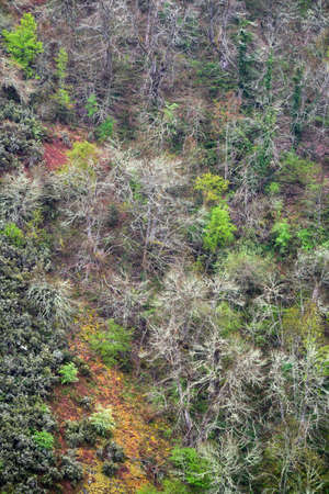 Hillside covered with twisted trunks and branches of different tree species in Cervantes Galicia Banco de Imagens