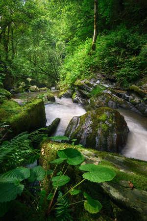 Lush vegetation on the bank of a mighty stream in Triacastela Courel Galicia Banco de Imagens