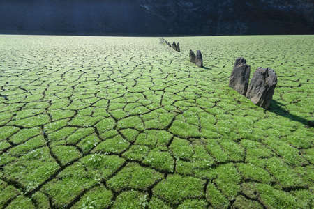 Green grass grows on cracked mud with the first downpours after the dry summer at the bottom of the reservoir near Portomarin Galicia