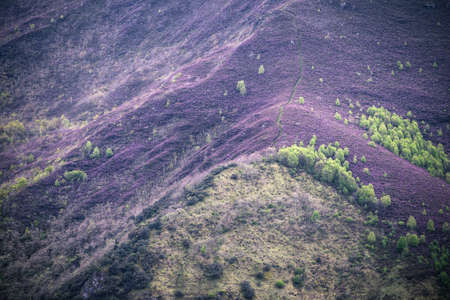 A mountain path crosses a slope covered in purple heather flowered in spring in the Courel Mountains Geopark in Galicia