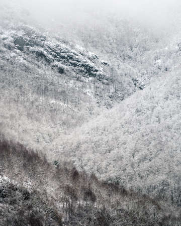 Slopes covered with snowy forests in the foothills of the Oribio in Triacastela in Galicia