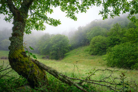 Forests and meadows in the mist in early summer in the Sierra de Ancares in Galicia Banco de Imagens