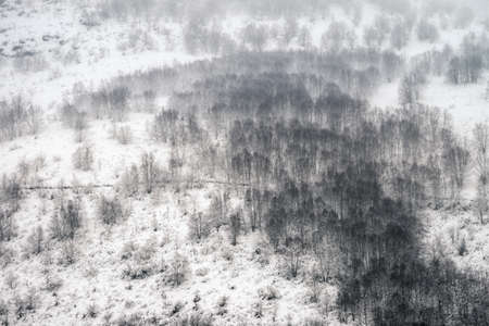 Winter landscape with a bare forest in the middle of a heavy snowfall in Triacastela Courel Galicia