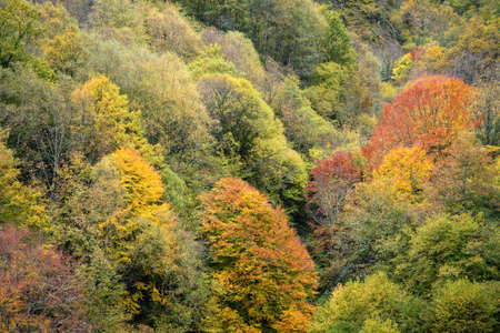 Diversity of autumn colors in the multiple tree species of the Devesa Da Rogueira forest in Courel Lugo Galicia Banco de Imagens