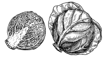Hand drawn sketch style set of cabbages. Single, with leafs Ilustração