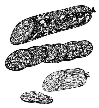 Smoked meat sausages sketches. Sausage and slices of sausage Ilustração