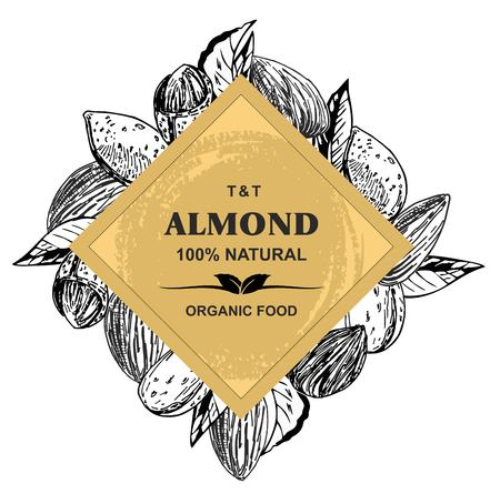 Almonds Hand drawn sketches vector in vintage style Ilustração