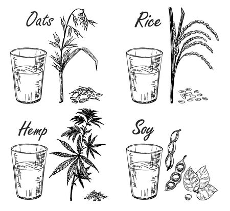 Four types of vegetarian milk. There are glasses with milk from oats, soy, hemp seed and rice. Sketch. Vegetable milk.