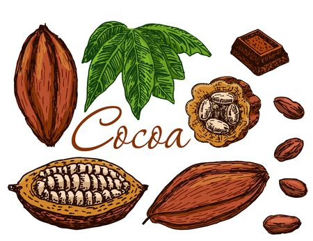 Cocoa beans, cocoa leaves, cocoa branch with fruits of cocoa, chocolate