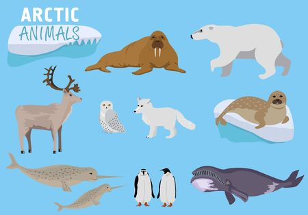Arctic animals. Alaska animals. Cute animal set. Illustration for education