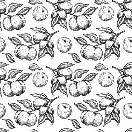 Apricot seamless pattern. Vector drawing. Hand drawn fruit, branch. Summer food engraved style illustration. Detailed vegetarian sketch. Great for label, print, packaging, background Ilustração
