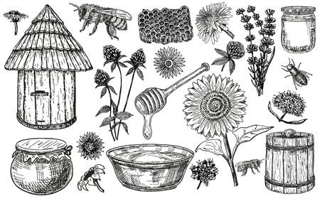 Honey set with plants and flowers. Collection of hand drawn sketch illustrations