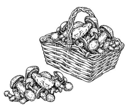 Basket with mushrooms. Vintage sketch background. Hand drawn