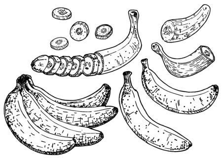 Banana set vector sketch. Isolated hand drawn peel banana, peeled banana and sliced pieces Çizim