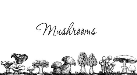 Cute mushrooms border, hand drawn collection. Isolated Sketch organic food drawing template