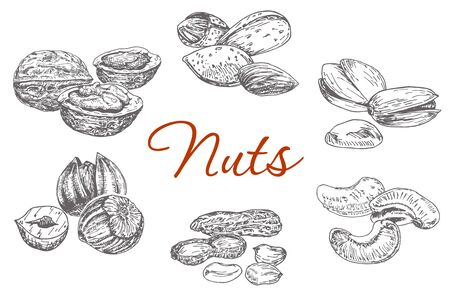Assorted nuts. Set of vector sketches. Walnuts, almonds, pistachios, Brazil nuts, peanuts, hazelnuts.