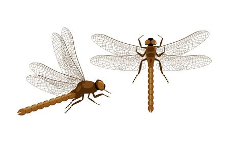 Set of vector dragonfly. Top and side view on realistic dragonfly. Decorative element for embroidery, patches and stickers.