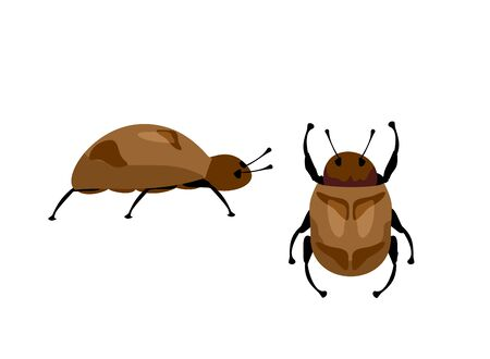 Vector of beetle on a white background. Insect. Chafer. Beetle. Insects bugs