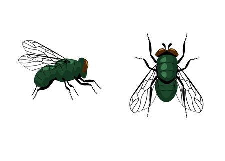 Fly single vector icon. Vector fly close up and top side view isolated on white background. Housefly pictogram. Wildlife symbol.