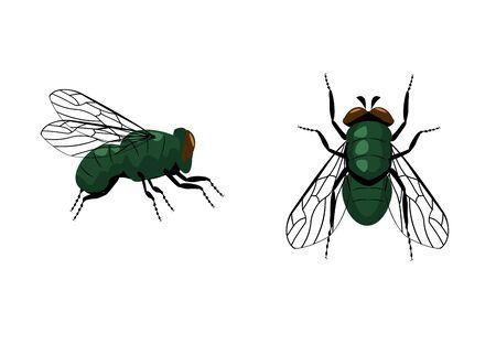 Ikona mucha pojedynczy wektor. Wektor mucha bliska i widok z góry na białym tle. Piktogram mucha domowa. Symbol przyrody. Ilustracje wektorowe
