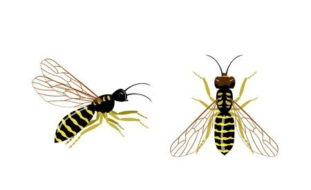 Wasp icons set. Set of hornet or wasp vector icons for web design. Wasp insect vector color drawing vector illustration