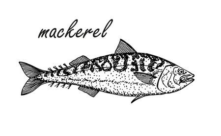 Mackerel hand drawing vintage style. Ink sketch of horse mackerel. Hand drawn vector illustration of fish isolated on white background.