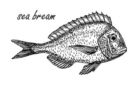 Vector Sea Bream element in sketch style. Hand drawn carp sketch symbol. Fish vintage engraved vector illustration Illustration