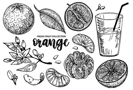 Orange set sketch. Collections of Oranges. Branches with citrus fruits. Flowering plant with leaves. Hand drawn vector illustration. Perfect for packing, greeting cards, invitations, prints etc