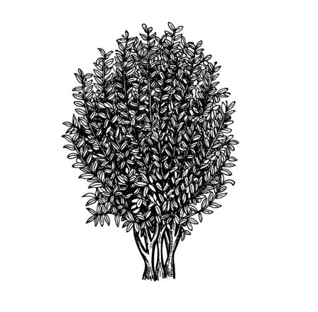 Laurel tree sketch. Ink sketch isolated on white background. Hand drawn vector illustration. Retro style. Vettoriali