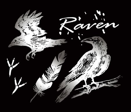 Raven set. Raven sits on a branch, flies. Feather and footprints of a bird. White image on a black chalkboard.