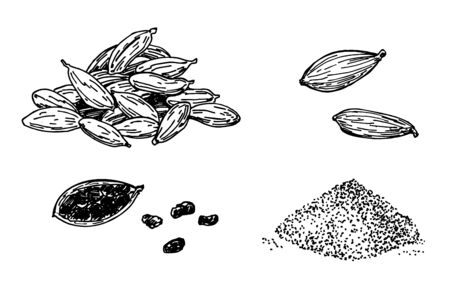 Cardamom set. Hand drawn engraving, ink, spices in sketch style. Ground cardamom and grains. Vector illustration