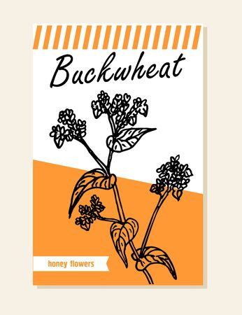 Buckwheat label, sticker and card for wildflower honey products. Banners for beekeeping and apiculture with sketch hand drawn illustrations