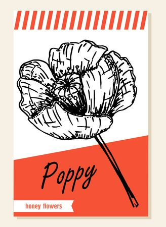 Poppy. Honey plants. Label, sticker and card for wildflower honey products. Banners for beekeeping and apiculture with sketch hand drawn illustrations