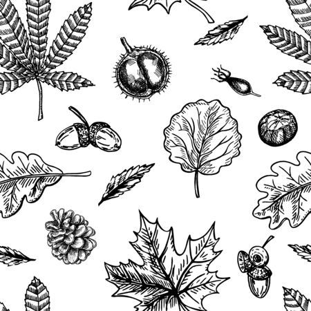 Autumn seamless pattern with leaf, autumn leaf background. Cute backdrop. Leaf fall. Autumn leaves, cones, chestnuts, acorns and berries. The elegant the template for fashion prints. Vector.
