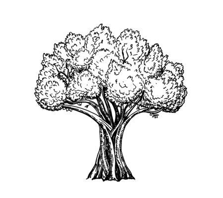 High detail illustration of olive tree, hand drawn, vector. Vintage olive engraved background. Hand drawn illustration Retro style. Ilustración de vector
