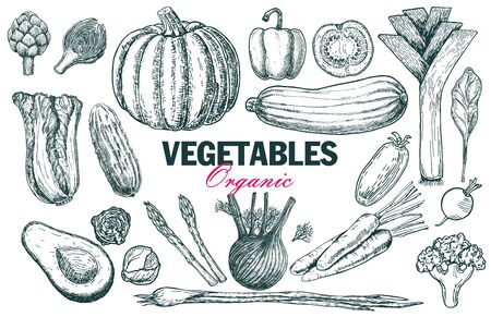 Set of various hand drawn vegetables. Sketches of different food. Organic healthy food. Sketch icon vegetables. Isolated on white Banco de Imagens - 150431396