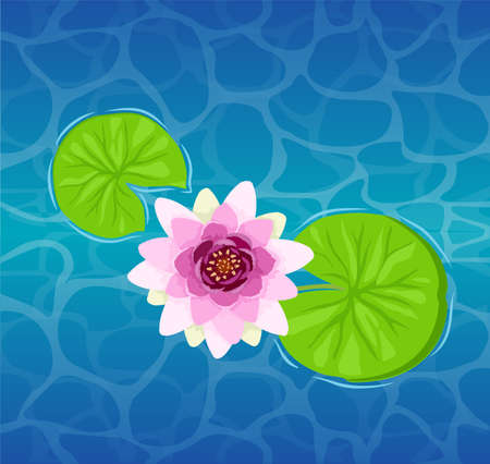 Beautiful lotus flower on the water close-up. Beautiful Lily Lotus. Illustration of a lily or lotus and lily.