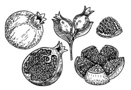 Hand drawn sketch style pomegranates set. Pomegranates with seeds and leaves. Sketch style vector illustration. Juicy natural Organic fruit. For cooking, cosmetic package design, healthcare.