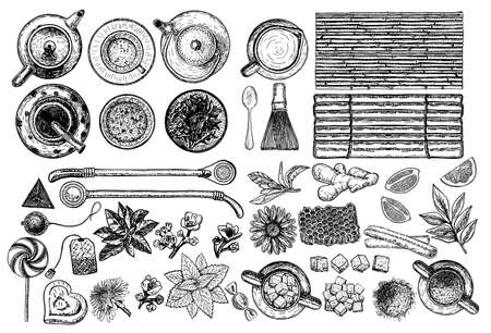 Tea and Herbal Tea shop set vector illustration. Vector design with tea ingredients. Hand drawn sketch collection. Engraved style.