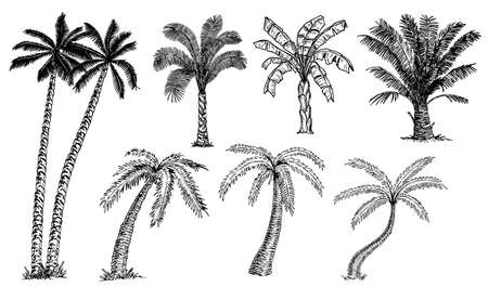 Palm trees set sketch. Different types of palms. Banana palm, coconut palm, date palm. Tropical trees.