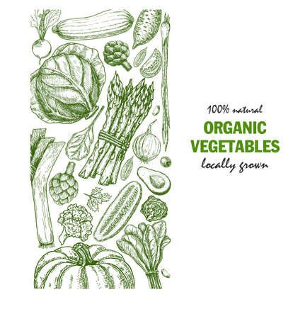Organic vegetables food card design. Farmers market menu design. Organic food poster. Vintage hand drawn sketch vector illustration.