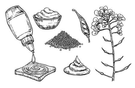 Mustard sauce in bowl vector drawing. Hand drawn food ingredient. Botanical flower branch and seed pile, seasoning in a bottle. Natural spice and flavor. For template label, packing design