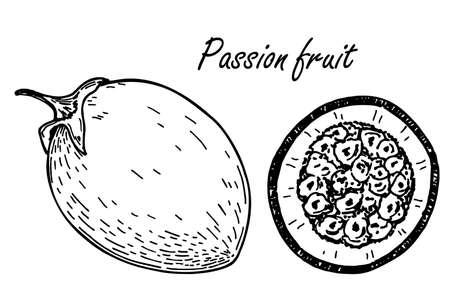 Passion fruit sketch set. Vector hand drawn passion fruit Illustrations. Detailed retro style image. Vintage sketch for labels. Elements collection for design.