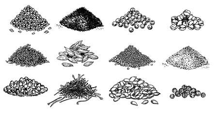Piles of spices. Black pepper, sesame seeds, poppy seeds, caraway seeds, saffron, marjoram, cumin, cardamom. Spices set. Natural seasoning and cooking ingredient. Vector sketch on white background