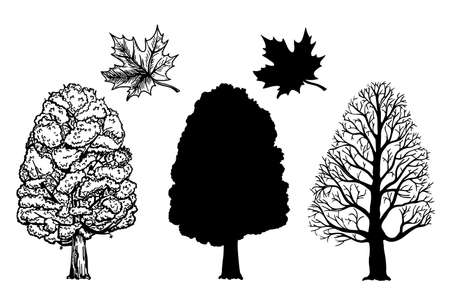 Winter and summer maple trees. Branch and leaf. Ink sketch isolated on white background. Hand drawn vector illustration. Retro style. Canadian symbol. Sketch elements set for graphic and web design.