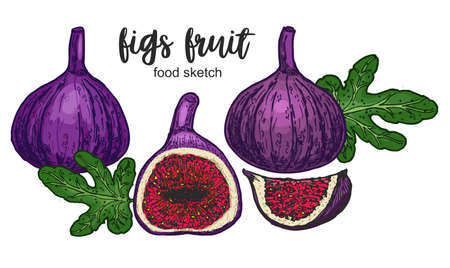 Figs. Composition with whole, cut fruits. Drawing in colorful sketch style. Food design with fruit. Hand drawn sketch of figs. Vector illustration. Color sketch line.